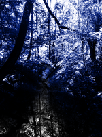 Blue Forest 2 by Pencil-Wolf