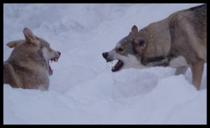 Beasts in the Snow VIII by Wodenswolf