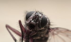 Fly frontal by Phy6