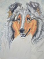 Blue Merle Sheltie by joniwagnerart