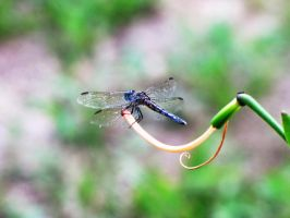 dragon fly by misducky