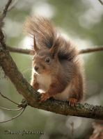 Red Squirrel by MisanthropicBastard