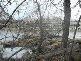 At the bank of the Potomac by Flaherty56