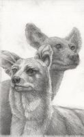 Dhole and African Dog by jbaham