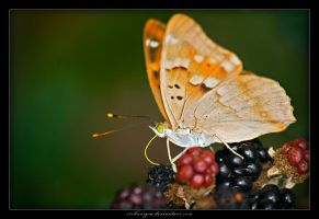La Mariposa sulle more by stellanigra