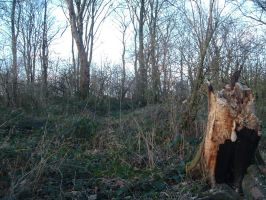 Copse stock 15 by RobynSmaleBeorg