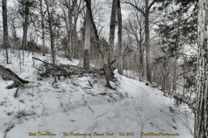 00-TheParklandsOfFloydsFork-Feb-2015-SAM-0126-HDR- by darkmoonphoto