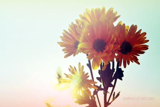 Sun Blotted Daisies by MsGabrielle