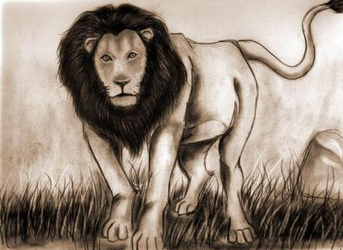 plate105lion by amao2006