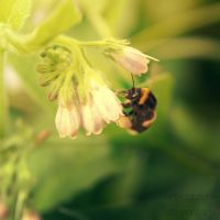 Busy Bee by Art-ography