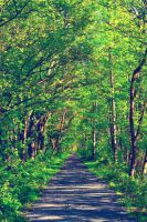 Green forest trail by creeperdude