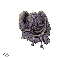 Northern Saw Whet Owl by WooflesArt