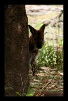 Hiding Wallaby by morphi1972