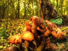 Mushrooms by zois-life