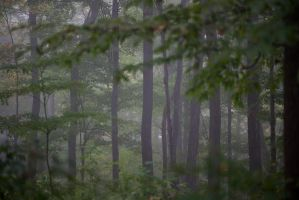 Foggy Forest Stock by Snowenne