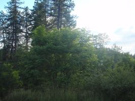 Trees by topec