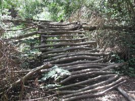Nature - Forest Stairs 1 by Stock-gallery