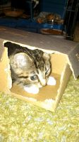 Lil' Bean in a box by FutonHorse