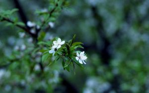 White Blooms II by Baltagalvis