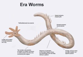 REP: Era worm by Ramul