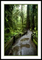 Cathedral Grove by NaujTheDragonfly