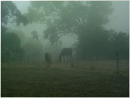 Horses In The Mist by kailorien