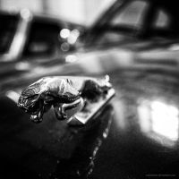 cat on the hood by antarialus