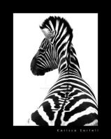 Zebra in Contrast by Starry-eyed25
