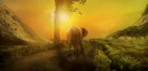The Last Journey + + of the old elephant + + by Highme63