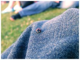 A Ladybirds world by masternoname