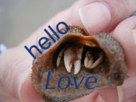 hello, love! by xXx-D-A-I-S-Y-xXx