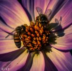 make love with a flower by Nourssica