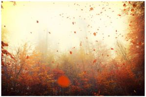 falling leaves I by Tirethiel