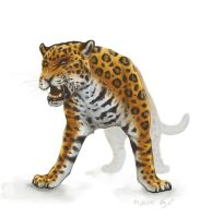 Jaguar by Werwal