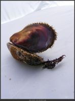 Unrestricted Object Stock - Sea Shell 18 by shelldevil