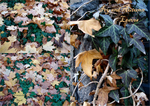 Ivy and Fall Leaves by Comacold-stock