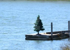 Christmas on the dock of the bay by ArtieWallace