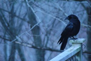 Crow in Winter by Impure-Soul-2