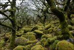 the churning sea of rocks and moss by LordLJCornellPhotos