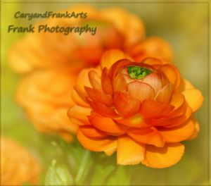 Orange by CaryAndFrankArts