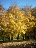 The Autumn Gold 12 by faelivrinen-stock