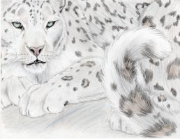 Snow Leopard Majesty by mysteriouswhitewolf