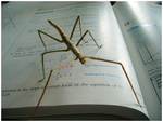 -In Your Mathbooks...- by starwide