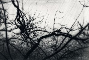 Branches 3 by Phototubby