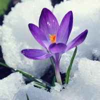 .:Spring Is Coming:. by bogdanici