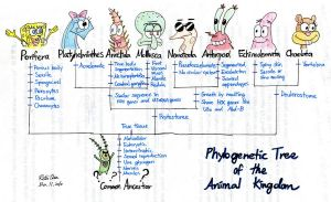 Phylogeny with Spongebob by thehurricanes