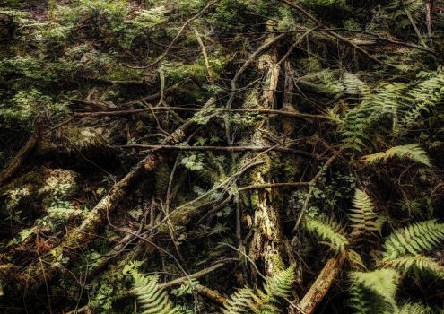 Forest Floor Norway by Son-of-Incogneato
