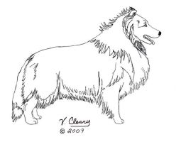 Sheltie lineart by GingerC