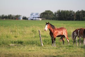 Clydesdales 1 by okbrightstar-stock