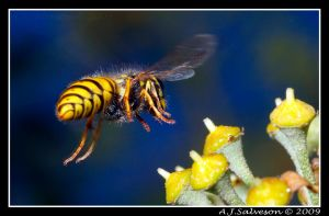 Wasp Landing by andy-j-s